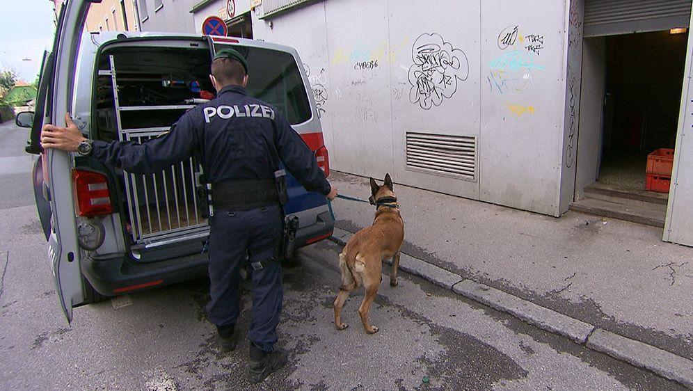 Drogenspürhund - Bildquelle: ATV