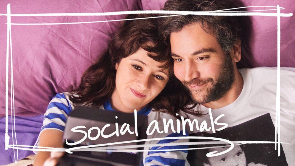 Social Animals - Bildquelle: Foo